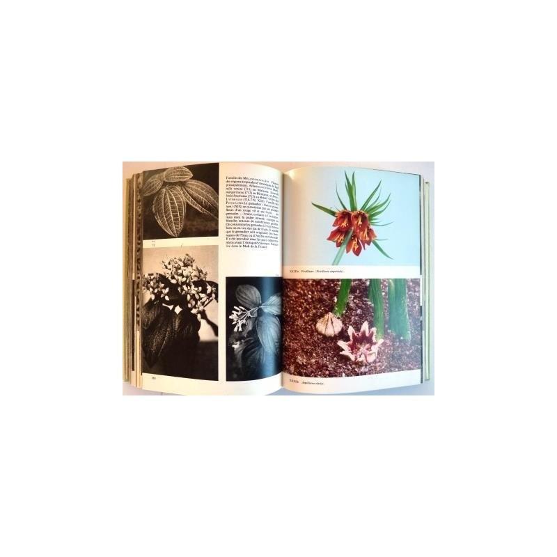 Encyclop die illustr e du monde v g tal par f a novak for Vegetal en anglais